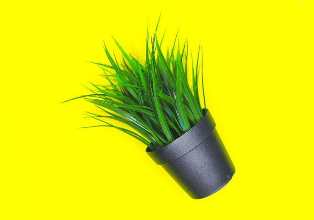 une petite plante artificielle sur fond jaune fluo